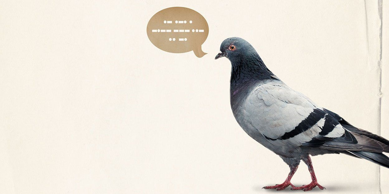 The Pigeon Project